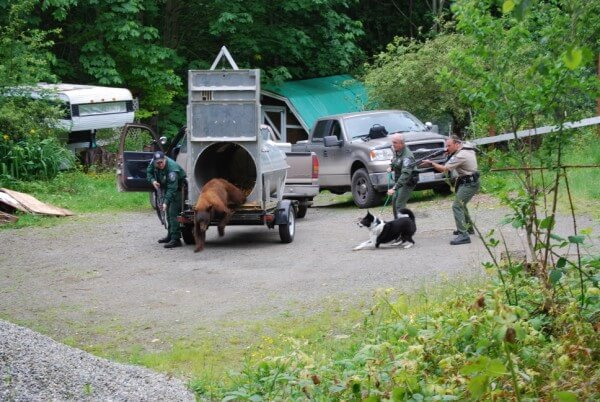 Officers Jones, Richards, and Valentine releasing a problem black bear